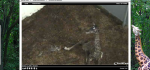 FireShot Screen Capture #100 - 'EarthCam - Giraffe Cam' - www_earthcam_com_usa_southcarolina_greenville